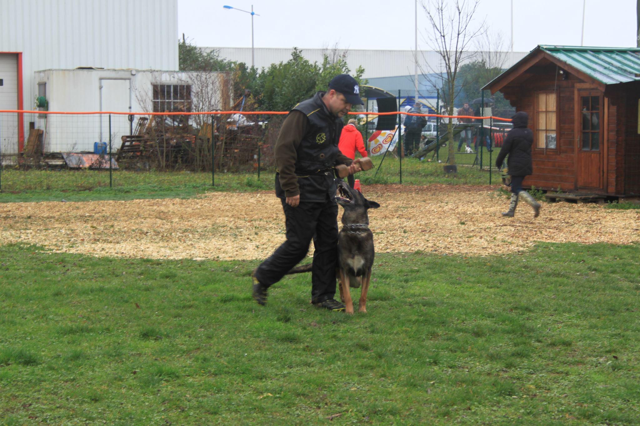 Dressage defense et dressage pistage pour chien